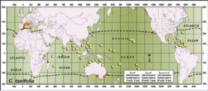 Worldwide distribution of Caulerpa taxifolia. Yellow squares = native range. Orange circles = invasive populations of Caulerpa taxifolia. Dashed line = 15°C average winter sea-surface temperature. Modeled after Verlaque et al. 2000.