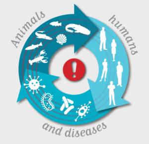 Animals, humans and diseases. OIE, 2015